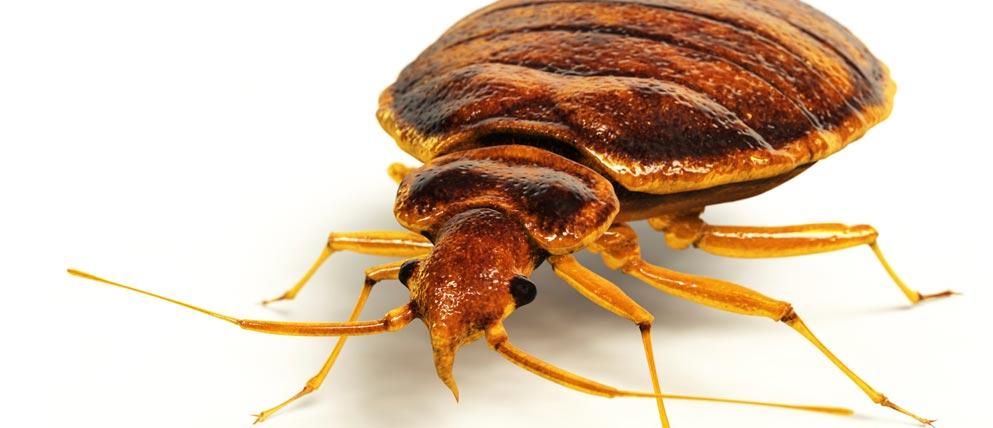 Trucos para combatir la alergia a los ácaros
