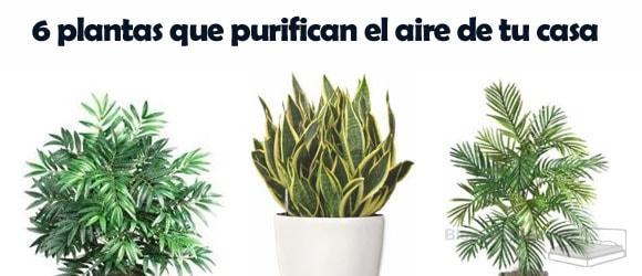 6 plantas para purificar el aire de tu casa share the Plantas limpiadoras de aire