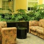 6 Plantas para purificar el aire de tu casa