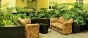 plantas hogar