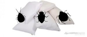 acaros almohada