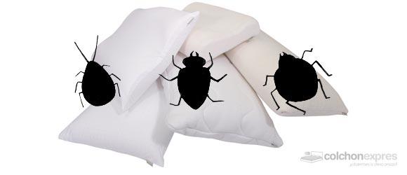 Un estudio sobre los acaros que crecen en las almohadas