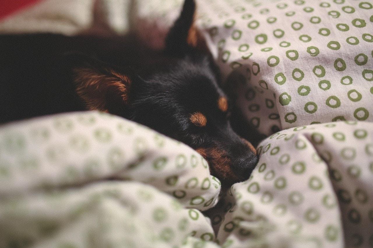 Calidad del sueño: Cómo mejorarla