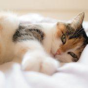 descanso_gato