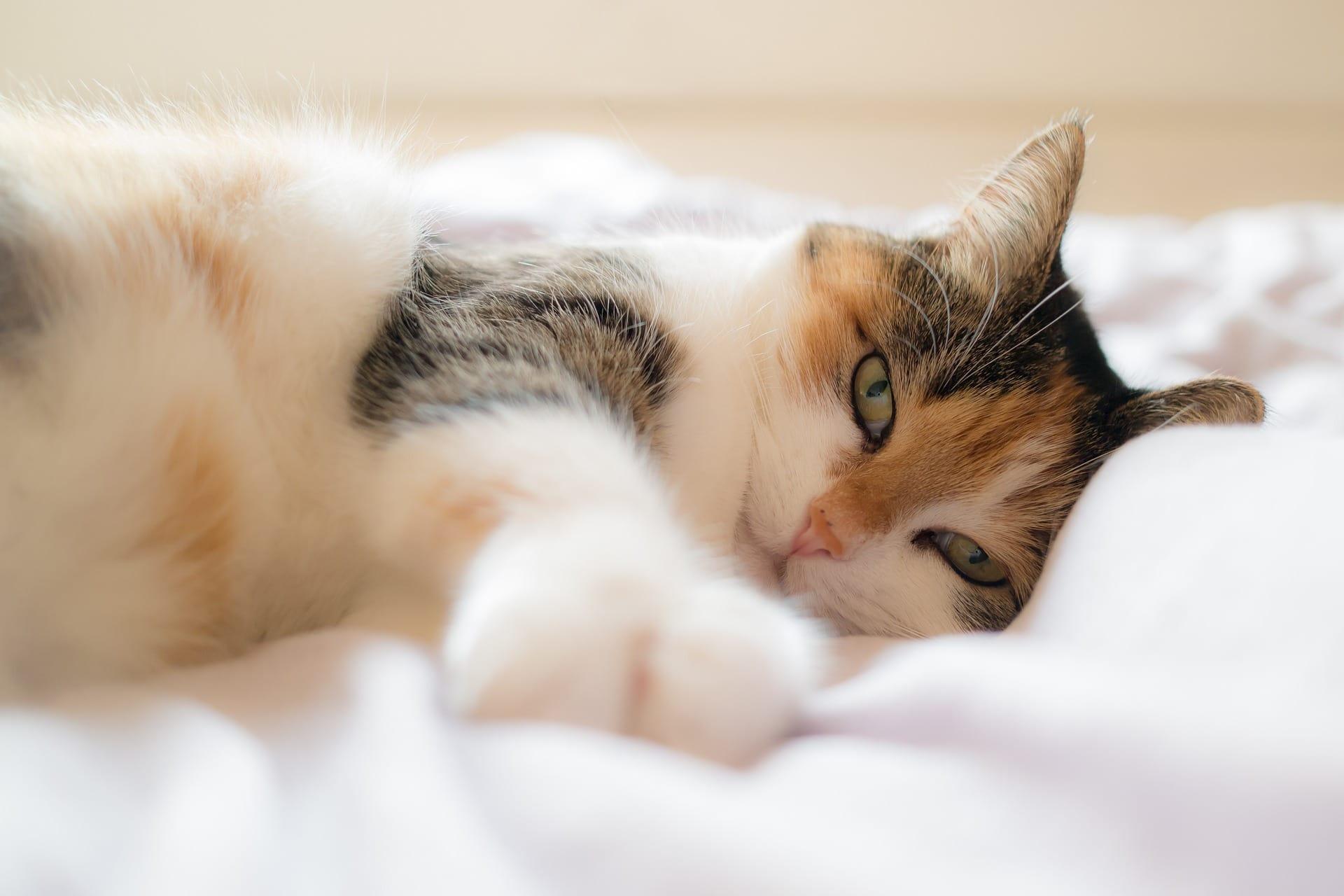 Curiosea con nosotros: ¿es bueno dormir con mascotas?