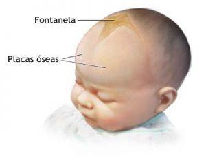Fontanelas
