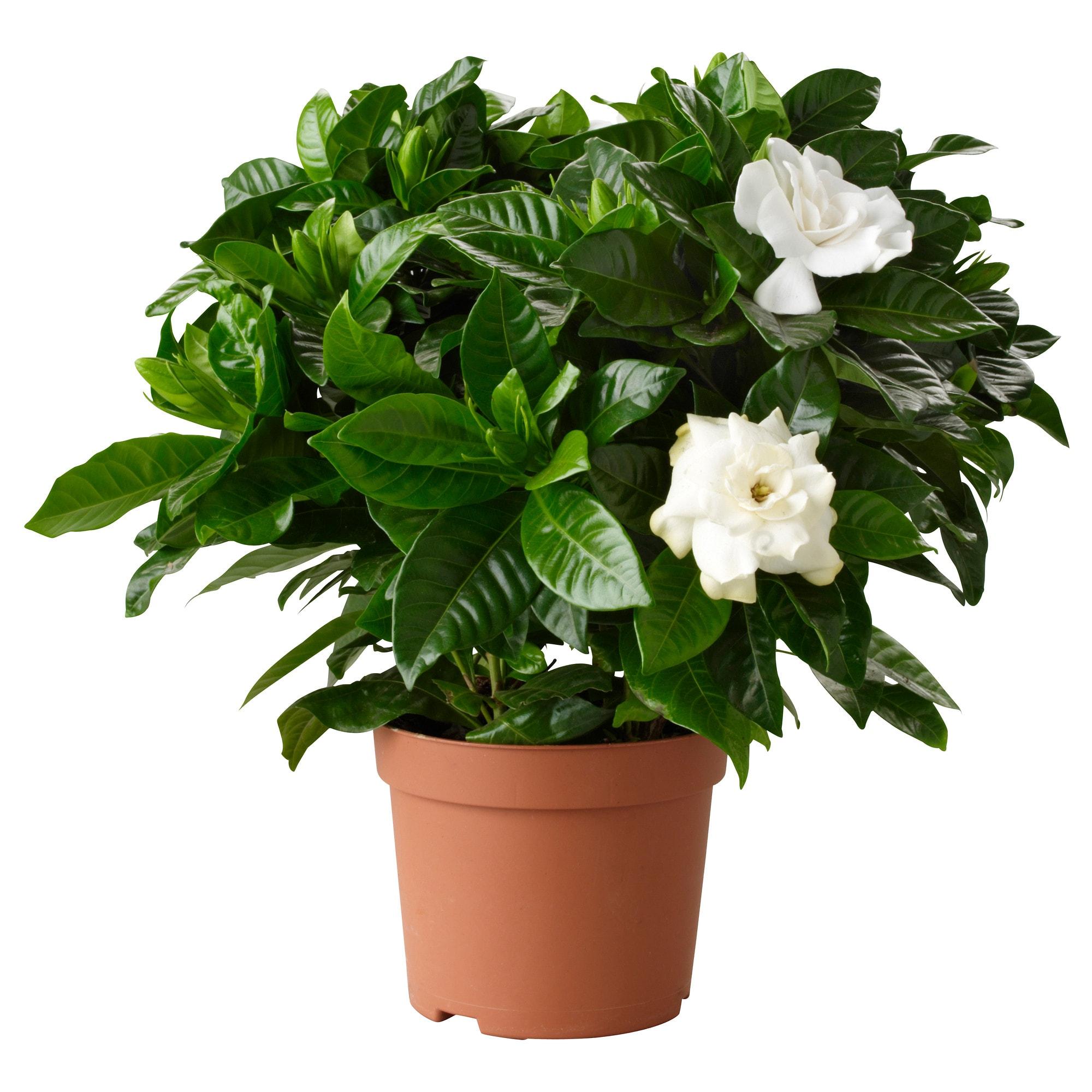 plantas para dormir