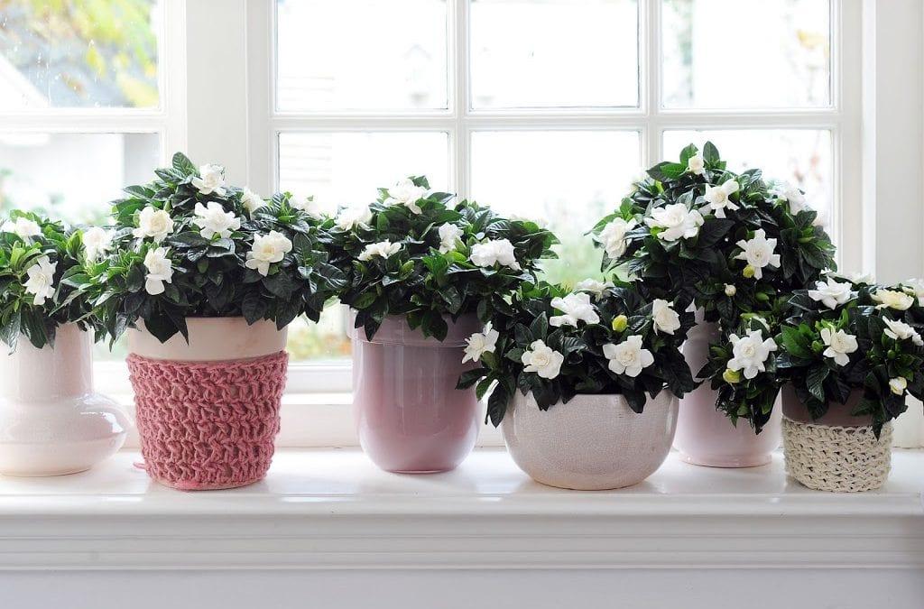 Plantas para dormir que puedes tener en la habitación